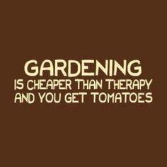 Tomatos lol