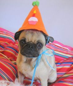 Happy Birthday Pet Hat that fits all sizes.