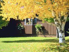 10 Fall Landscaping Tips >> http://blog.diynetwork.com/maderemade/2014/09/23/10-fall-landscaping-tips/?soc=pinterest