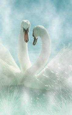 """love in the mist"" bird, pastel, anim, debbi orcutt, white, beauti, beauty, swan lake, feather"
