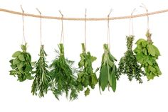 11 Incredibly Powerful Herbs to try  #skinnyms #superfoods