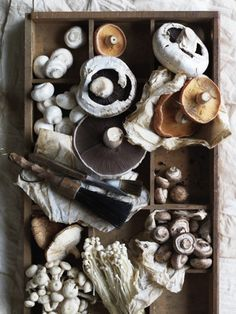 mushrooms by Chris Court-love the styling