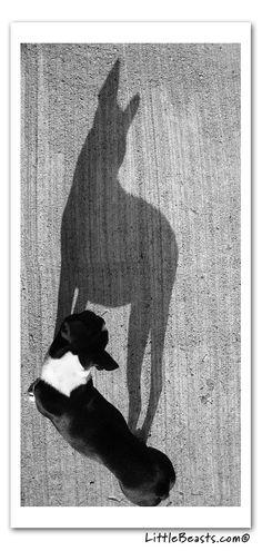 Shadow BT