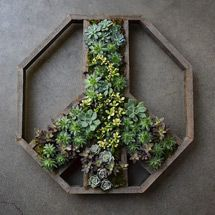 Give Peace a chance with plantable wooden frames