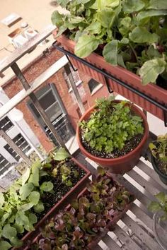 Container Gardening 101 - HOMEGROWN
