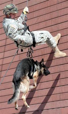 dog work, soldier, militari work, hero, dogs, militari humor, rappel dog, dog bond, friend