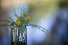 Rustic centerpiece of yellow billy balls.
