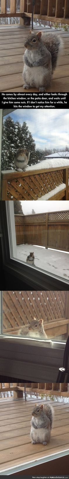 Squirrel who comes every day for nuts
