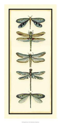 dragonfli collector, artcom, prints, gicle print, chariklia zarri