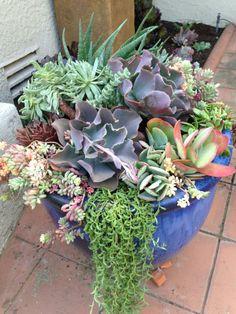 Succulent arrangement from Simply Succulents