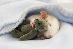 ~ Sweet dreams, little mouse.
