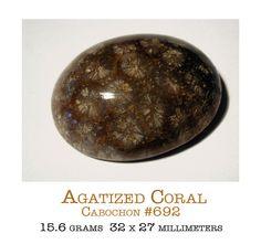 Agatized coral, aka fossil agate.