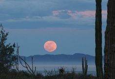 Baja Moon | Flickr