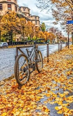 Late autumn fall of the leaves Paris