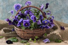 basket of pansies...