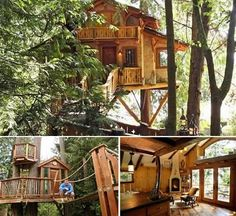 Amazing and Awesome Tree Houses