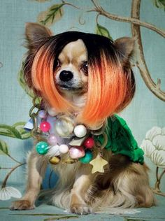 Chihuahua in Jewels and Wig, by Michael Baumgarten for Vogue Gioiello  bahahahahahahaa...so funny to me