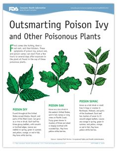 Cover page of PDF version of Outsmarting Poison Ivy and Other Poisonous Plants article, including illustrations of poison ivy, poison oak, and poison sumac