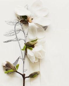 Magnolia and flower illustration no. 6692. $25,00, via Etsy.