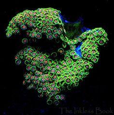 fluorescent coral