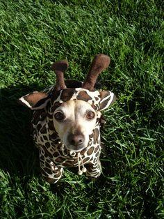 dog costumes :)