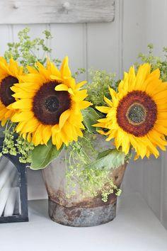 Love Sunflowers !!!