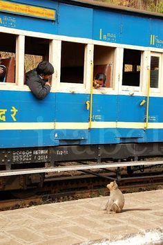 indian train, eye