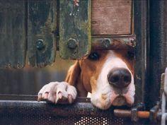 Dog peeking through the fence