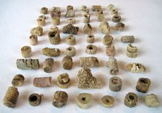 crinoid fossils.