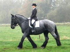 Horses i want on pinterest belgian draft horses belgian horse and