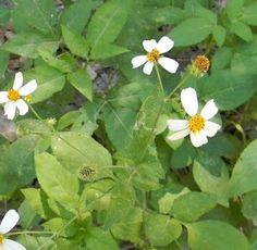 16 edible Florida plants