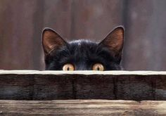 Kitty is peeking at you
