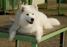 Top 8 fluffy dog breeds that everyone loves >>> Click on the photo above to find out more.