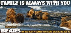 Experience the journey of a real-life bear family with your family. di.sn/hhU