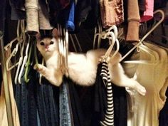 "You were once voted ""Most Likely To Succeed"" and here you are tangled in coat hangers. 