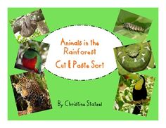 This is a sort, cut, and paste activity on the animals in the rain forest. Students cut out and sort the animals. They need to tell whether the animals are mammals, birds, reptiles, or insects. Students paste the picture in the correct category. They write the name of the animal under the picture. This is a great follow up activity on your lesson about the rain forest and the animals that live there!