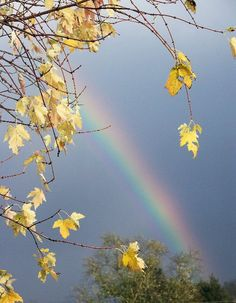 Golden Rainbow - photography Photo