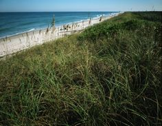These 24 miles of pristine, windswept beaches comprise the longest stretch of undeveloped beach on Florida's east coast. On the north end is familyfriendly Apollo Beach, which shines in a class of its own with gentle surf and miles of solitude. On the south end, Playalinda Beach is surfer central. Just west of (and including) the beach, the 140,000-acre Merritt Island National Wildlife Refuge is an unspoiled oasis for birds and wildlife.