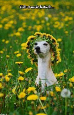 anim, flower crowns, funni, greyhound, flower children
