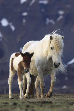 Cute pony mare & foal!