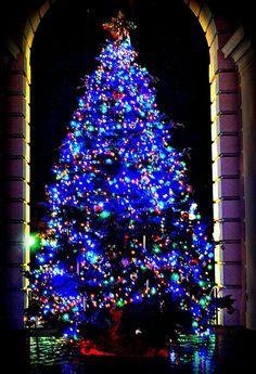 Pasadena Christmas Tree, California