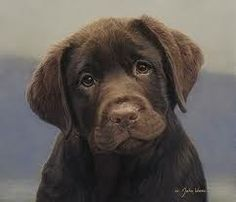 chocolate lab. only dog i'd consider getting. one day :)