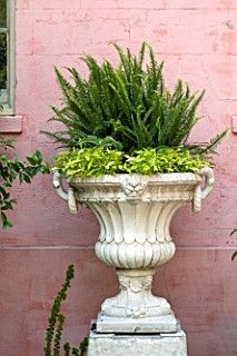 front doors, ferns, garden accessori