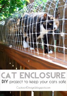 DIY outdoor cat enclosure to keep your indoor cats safe by cuckoo4design cat safe, anim, outdoor cat enclosures, indoor cat, diy outdoor, cat stuff, diy for cats, diy cat enclosure, cat walk