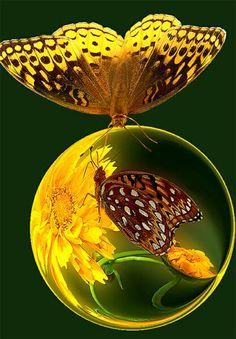 Butterfly bubble reflection