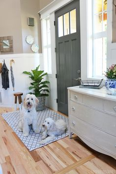 Use indoor/outdoor rugs inside your house for an easy to clean and maintain rug option! Great for families and pets! {Jack the Goldendoodle and Lily the Australian Labradoodle}