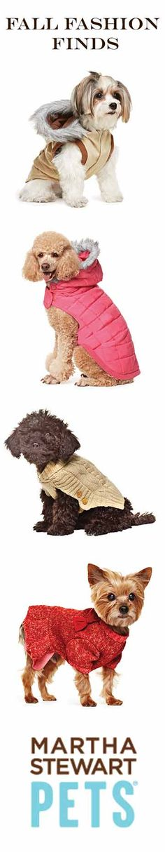 Fall fashion apparel from Martha Stewart Pets at PetSmart #Marthastewartpets #petsmart