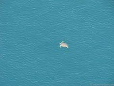 Sea turtle near Sebastian, Florida