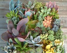 A succulent tray for use as a centerpiece.