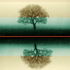 Landscape photography  Trees photograph  Still by ZenzPhotography